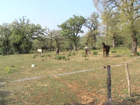 randonnée équestre, accueil chevaux dans le LOT