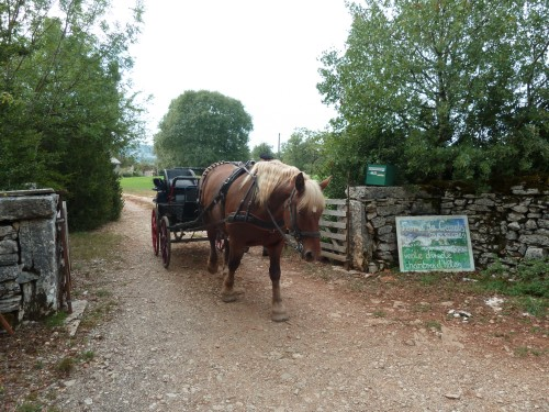 cheval, sport équestre